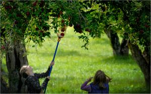 One Perfect Moment, Canyon Creek Orchard: Glenwood Springs, Colorado